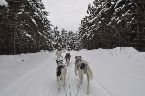 Canada winter offer many fun activities