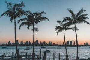 A skyline of a city through a row of palms in one of the best counties in Florida.