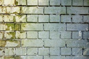 Brick wall covered in mold.