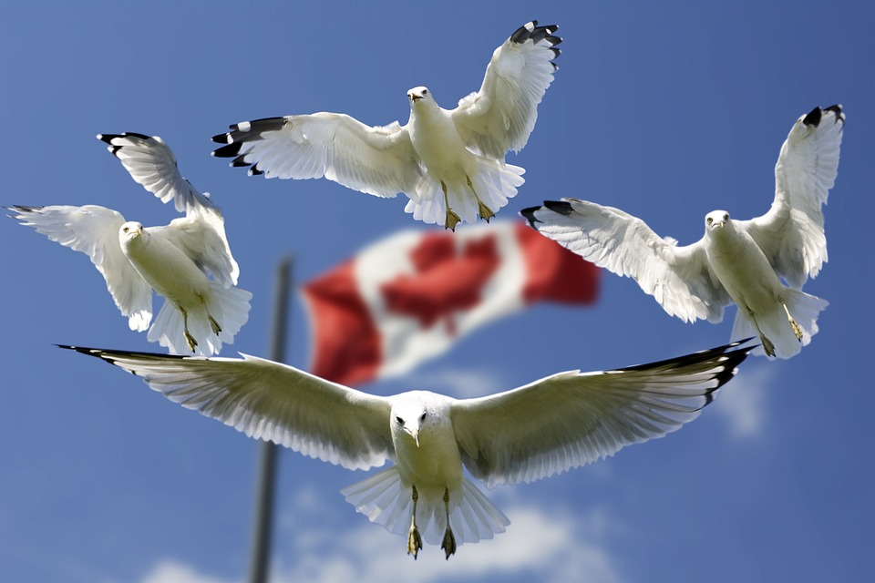 How to pack your home for Canada relocation?